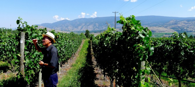 See Ya Later Ranch Winery Tour | Okanagan Falls Osoyoos