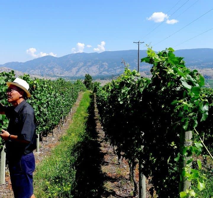 See Ya Later Ranch winery Okanagan Osoyoos vineyard british columbia nomss.com instanomss
