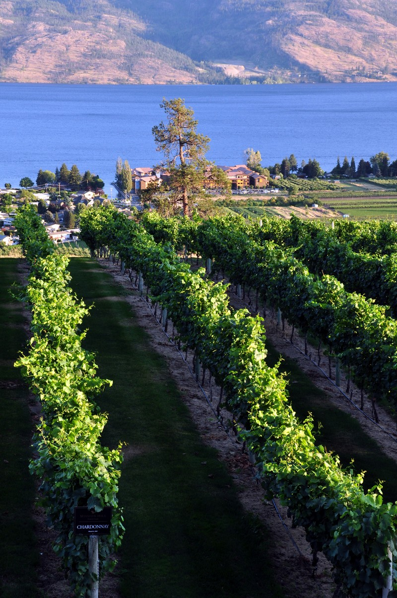 Mission Hill Winery Estate Okanagan Kelowna Summerland BC Nomss Instanomss Food Photography Travel Lifestyle Canada