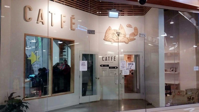 catfe cat cafe vancouver kitten feline Instanomss Nomss Food Photography Travel Lifestyle Canada