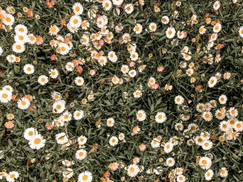 Doterra Essential Oil Blend for Seasonal Allergies Hayfever Recipe Instanomss Nomss.com Wellness Blog