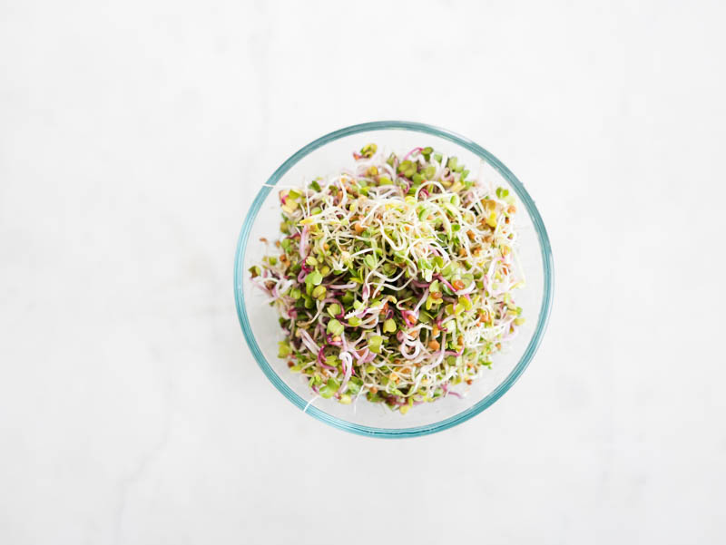 day 5 alfalfa and radish sprouts
