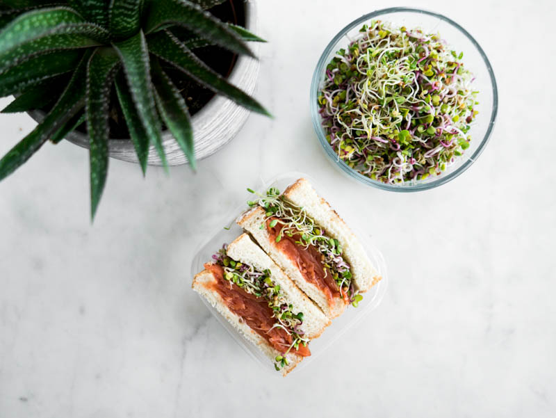 smoked salmon sandwich with alfalfa sprouts