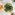 Instant Pot Braised Chinese Mushroom 髮菜炆冬菇食譜
